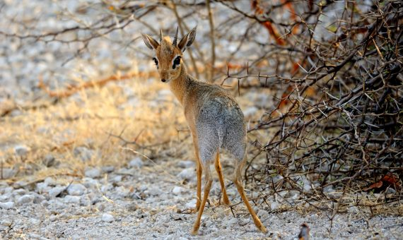 wild life in Namibia
